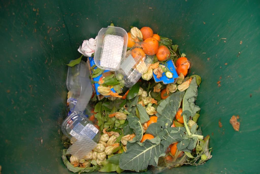 Bin with Food Waste Useful Random Facts