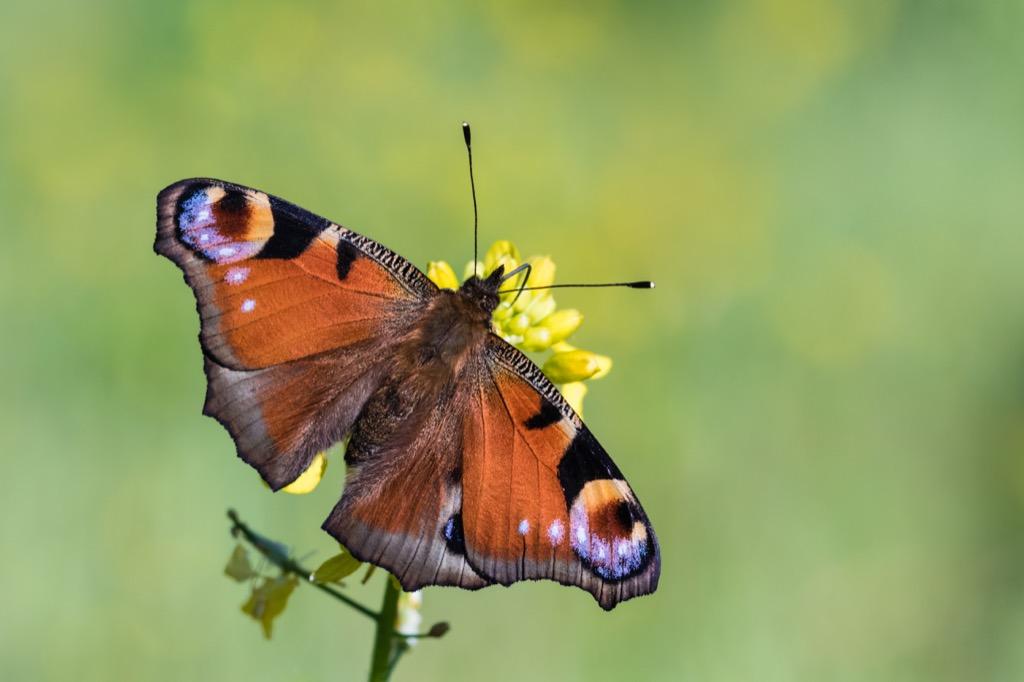 Butterfly Wordplay Jokes