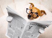 Dog Reading Paper Animal Jokes