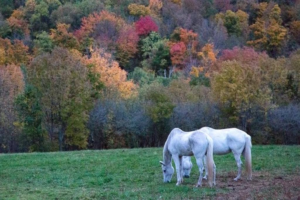 Horse Sanctuary South Kortright, New York airbnb