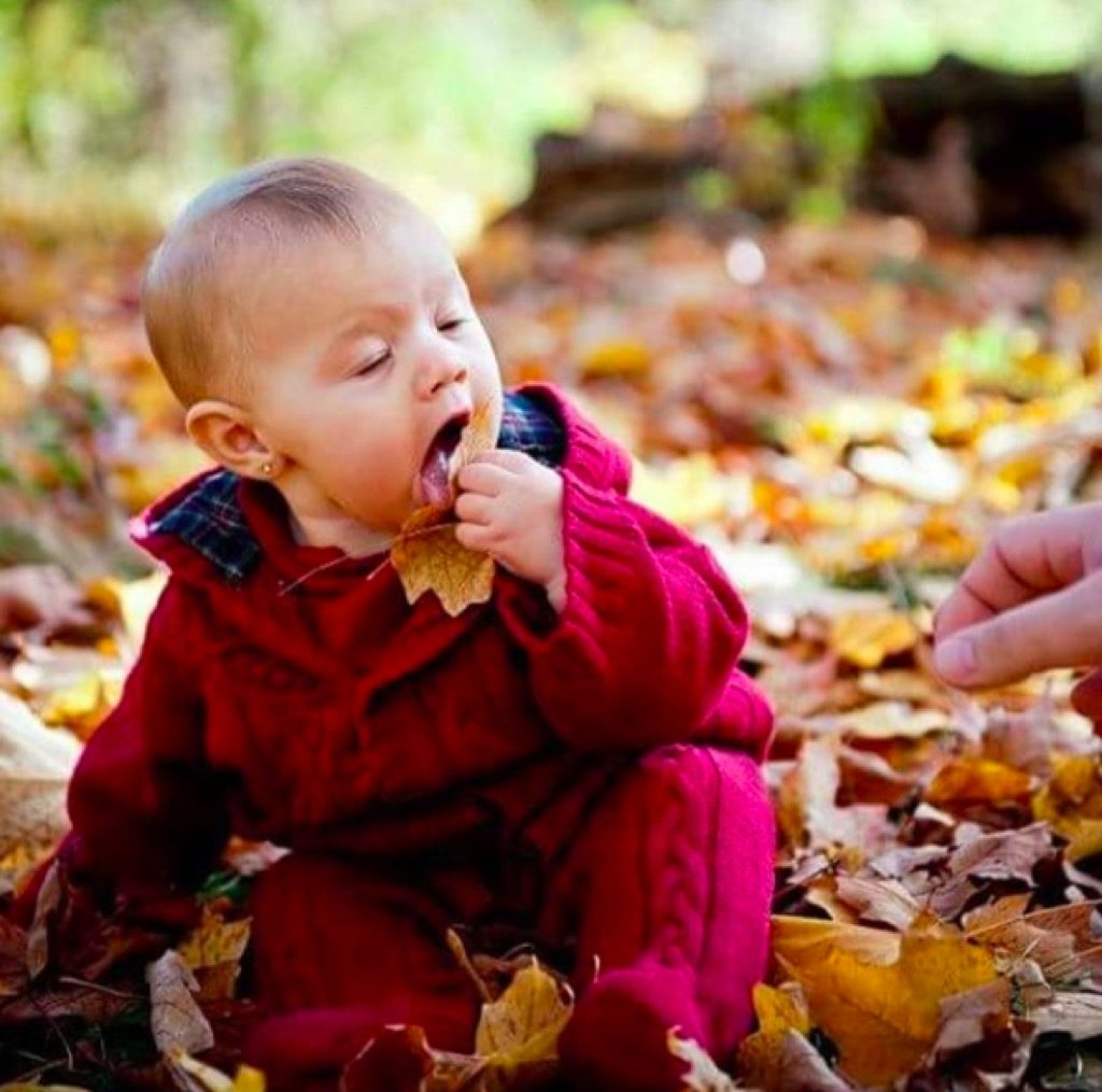 Eating leaves funny kid photos