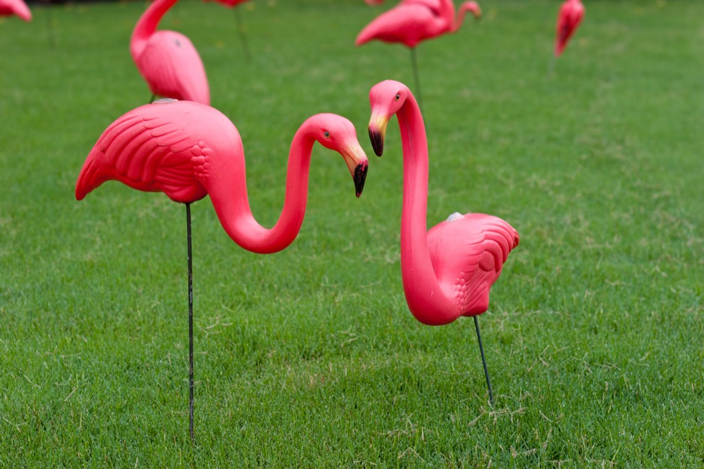 Plastic lawn flamingoes