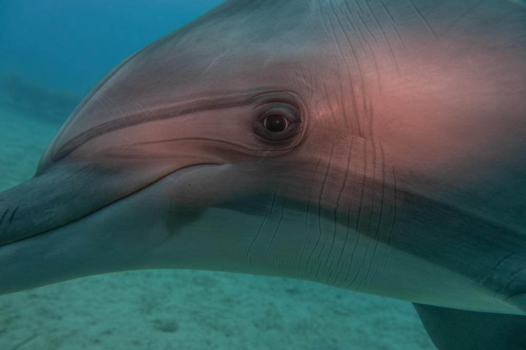 dolphin Animals Who Are Real-Life Heroes