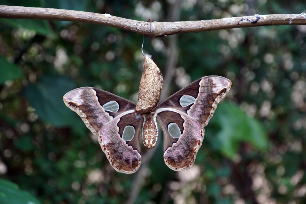 cocoon Amazing Facts