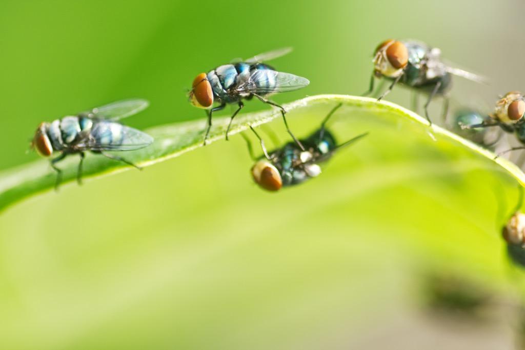 flies Amazing Facts