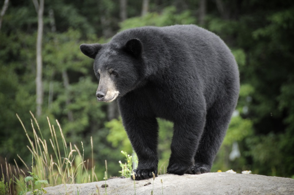 Bear Animals Who Are Real-Life Heroes