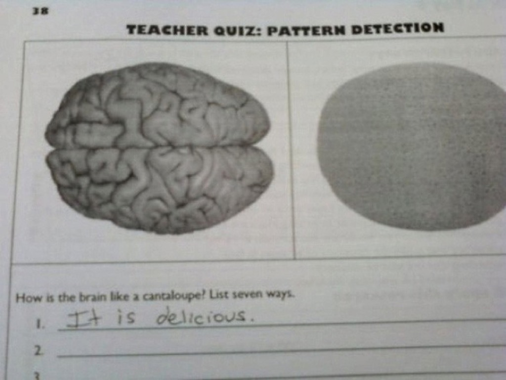 Canteloupe brain funny kid's hilarious assignments
