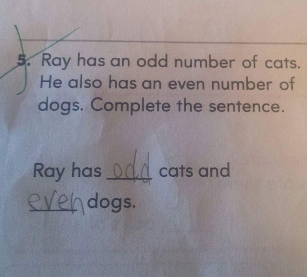 Cats and dogs funny kid's assignments