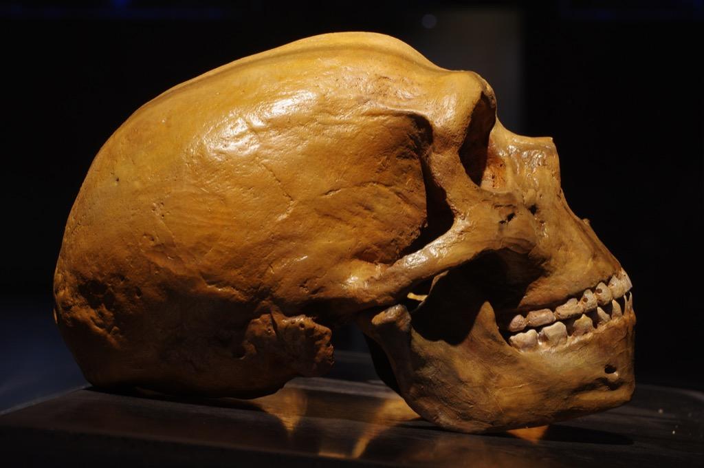 Neanderthal brain crazy news 2018