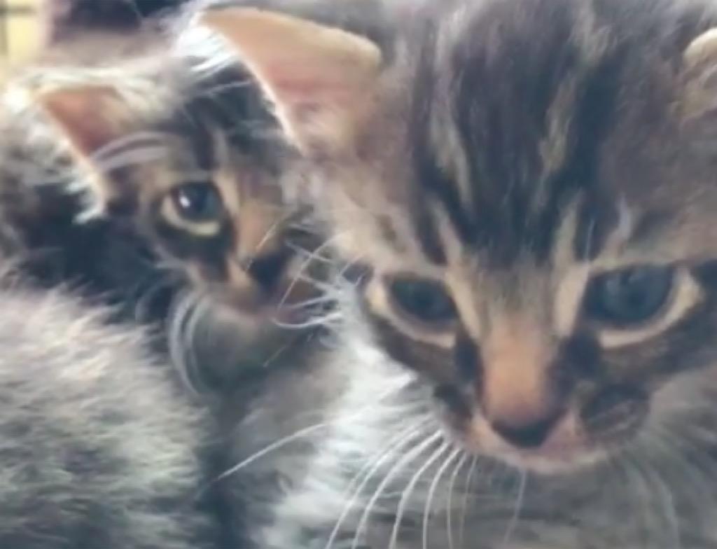 Amanda Seyfried's kittens