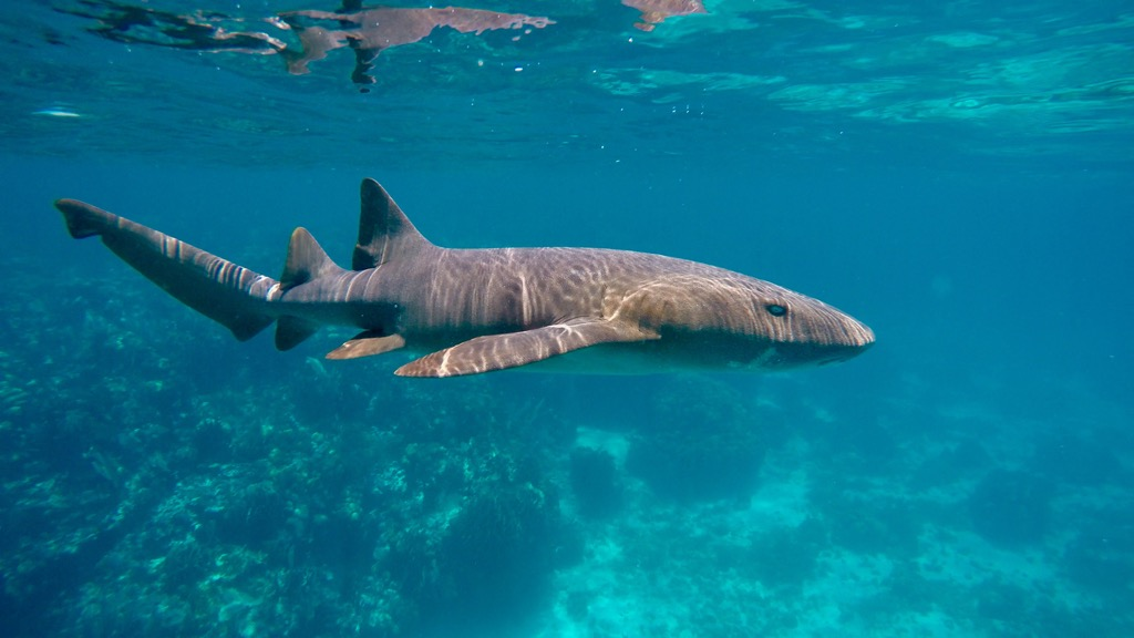 belize shark swimming ocean countries without clean water