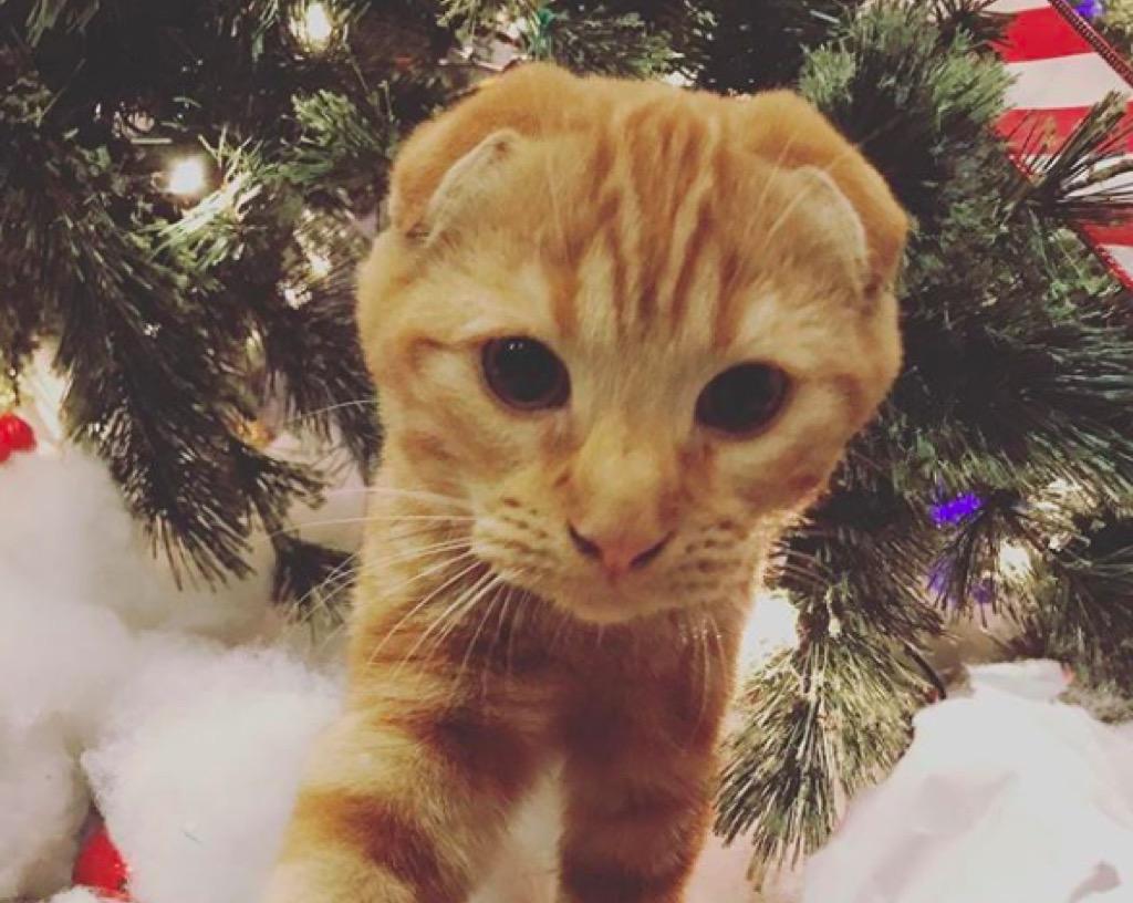 Bella Thorne's cat
