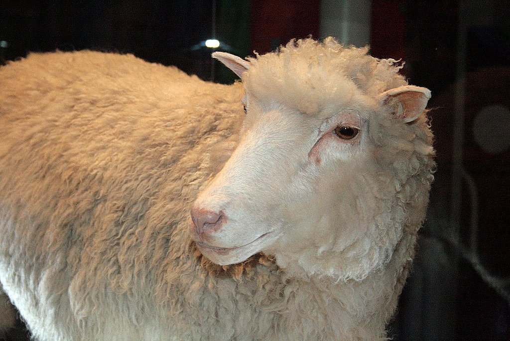 Dolly the Sheep Scientific Discoveries