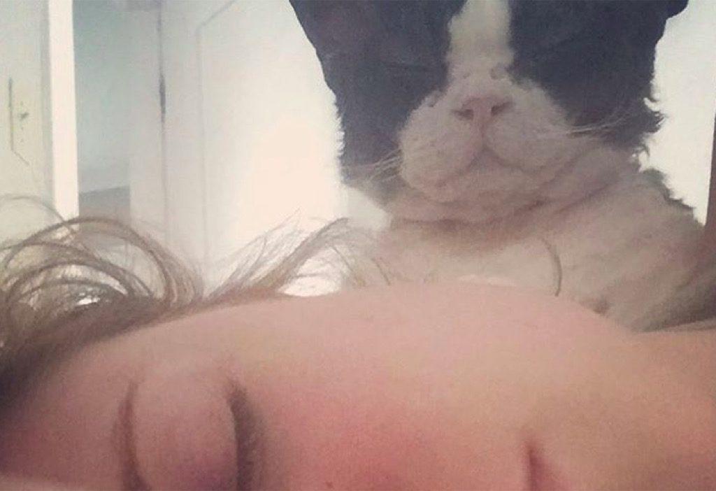 Evan Rachel Wood's cat