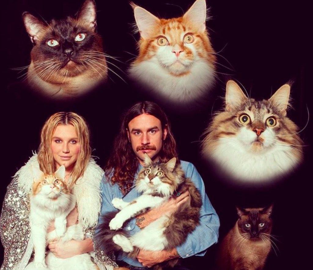 Kesha's cats