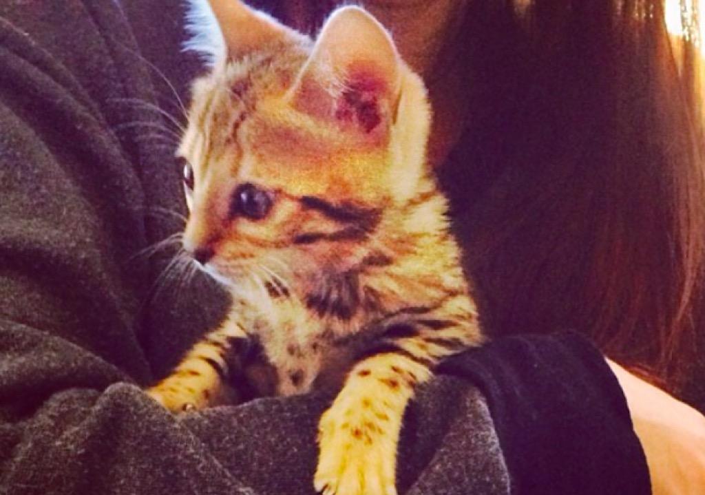Kourtney Kardashian Charli cat
