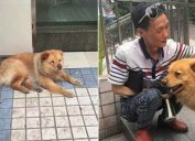 15-year-old Xiongxiong camps out at a subway station in China, letting people pet him all day, until his owner returns from work.