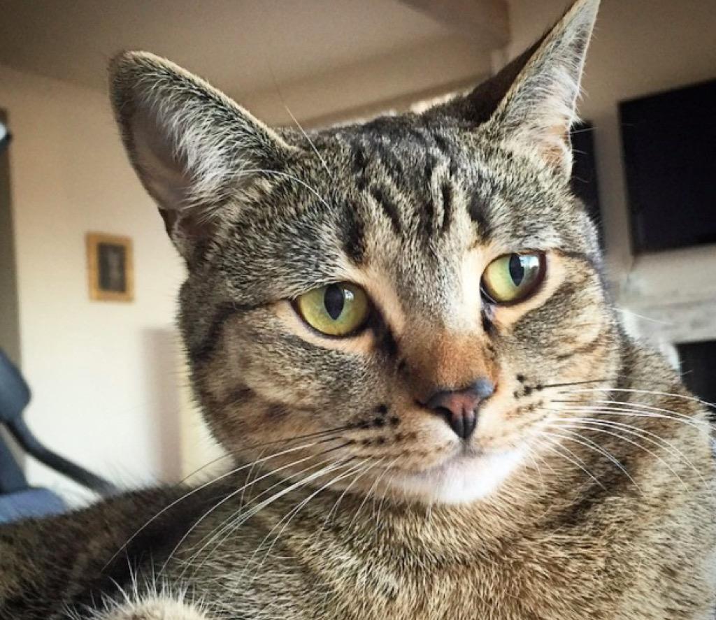 Mackelmore's cat