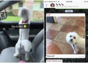 maltese dog gets mistaken for Nieves by dad at local Petsmart