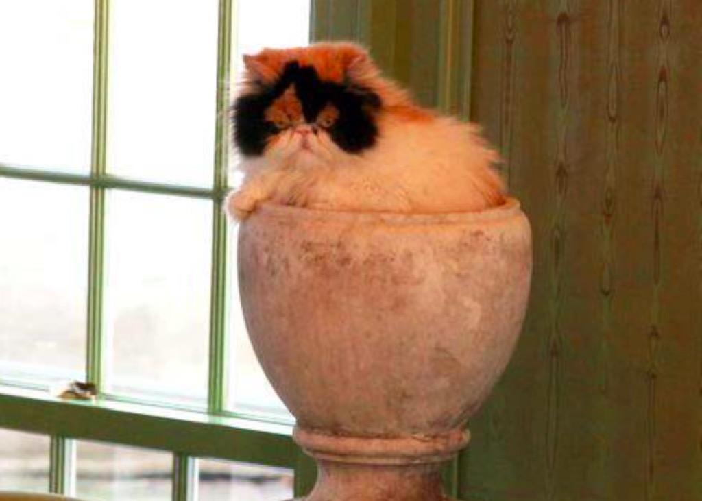 Martha Stewart Princess Peony cat