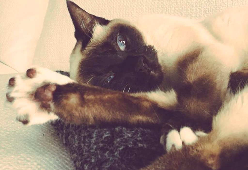 Ricky Gervais pet cat