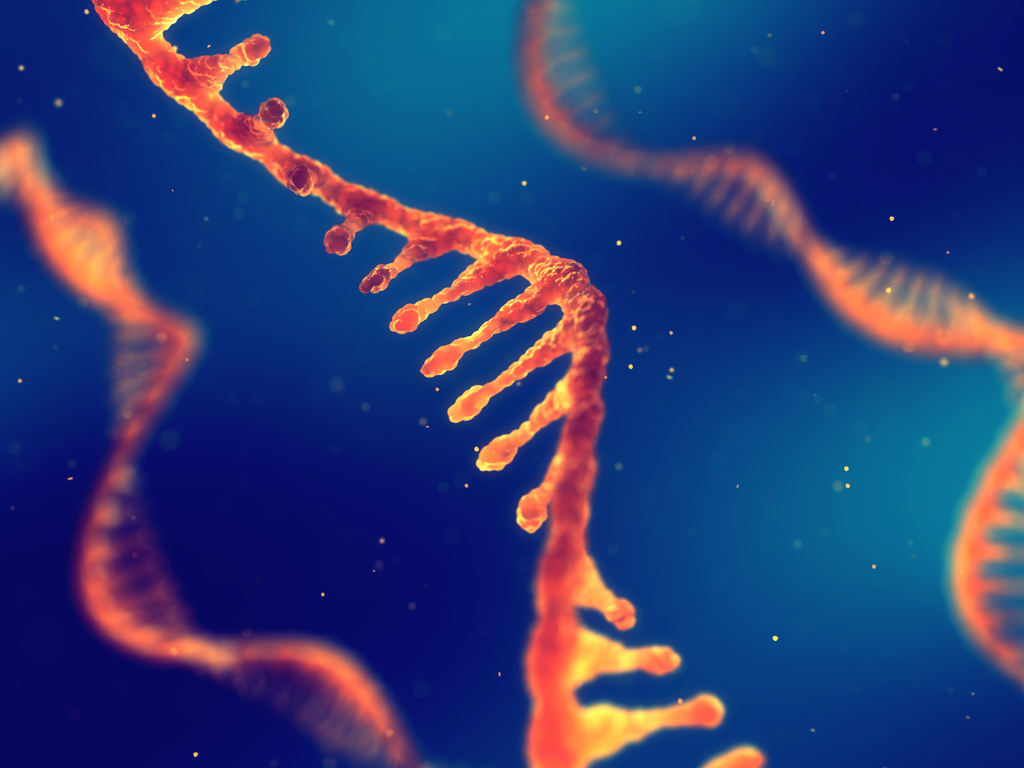 RNA Strand Scientific Discoveries