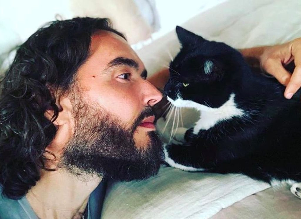Russell Brand's cat Morrisey