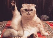 Taylor Swift Olivia Benson cat
