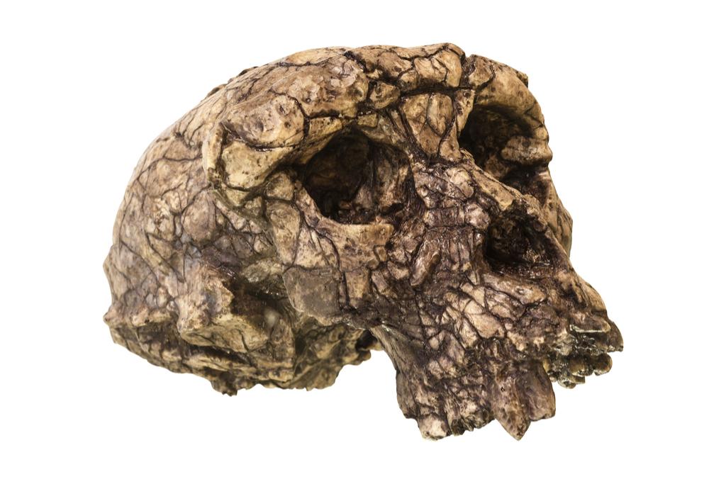 Toumai Skull Scientific Discoveries