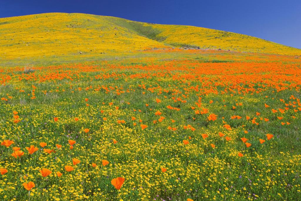 Antelope Valley California Poppy Reserve Magical Destinations