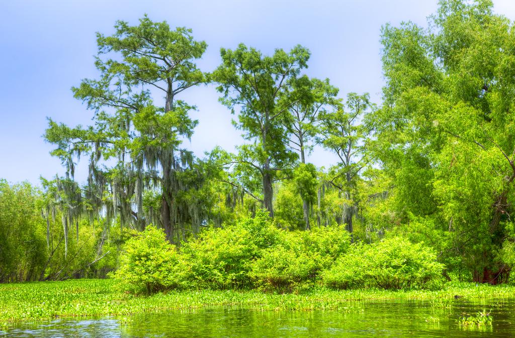 Atchafalaya Basin Louisiana Magical Destinations