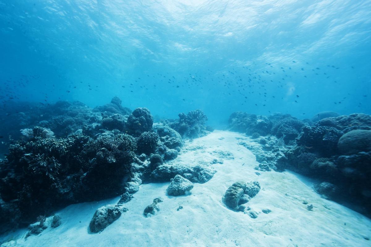 bottom floor of ocean, astonishing facts