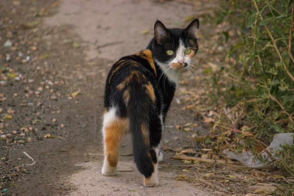 Cat with Low Twitching Tail