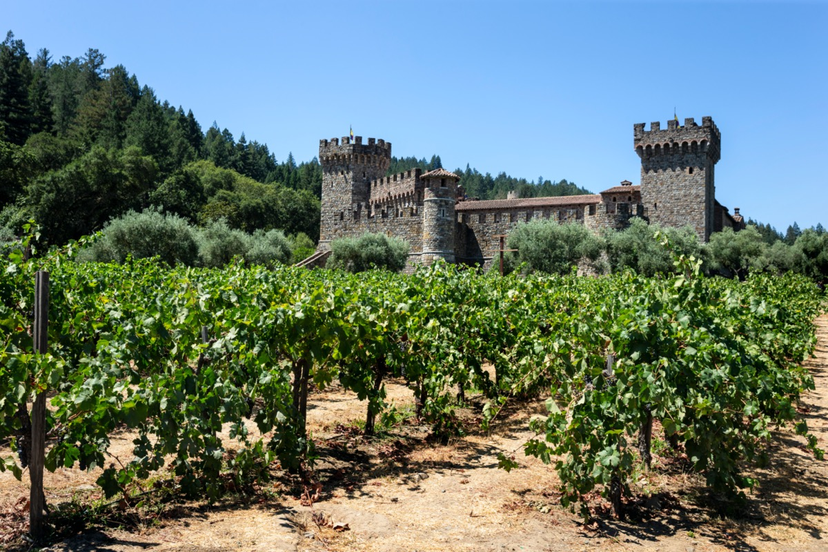 grape vines in front of a castle in california