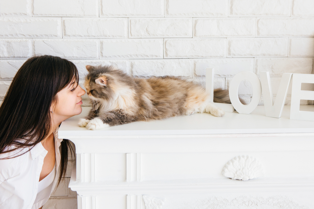 Cat and Owner Touching Noses
