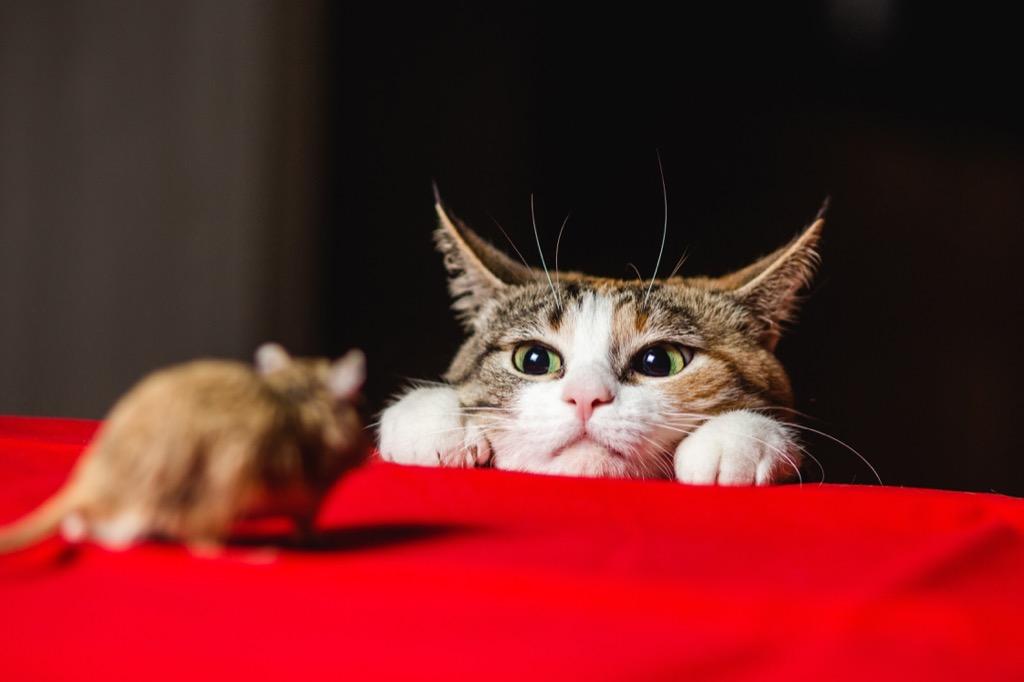 Cat Facial Expressions