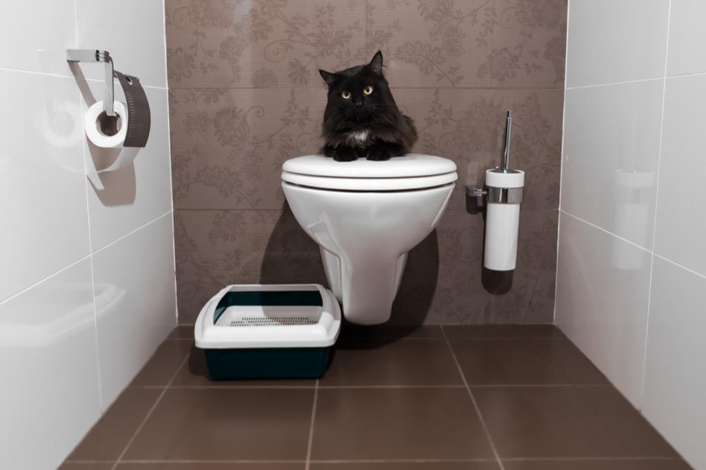 cat in bathroom corny jokes