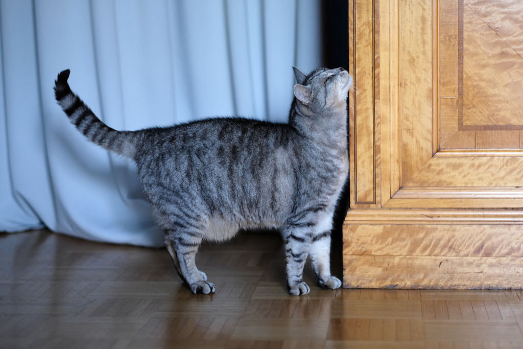 Cat Marking