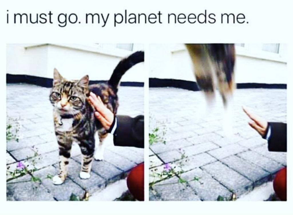 Super cat memes