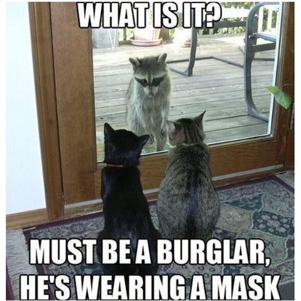 Raccoon cat memes