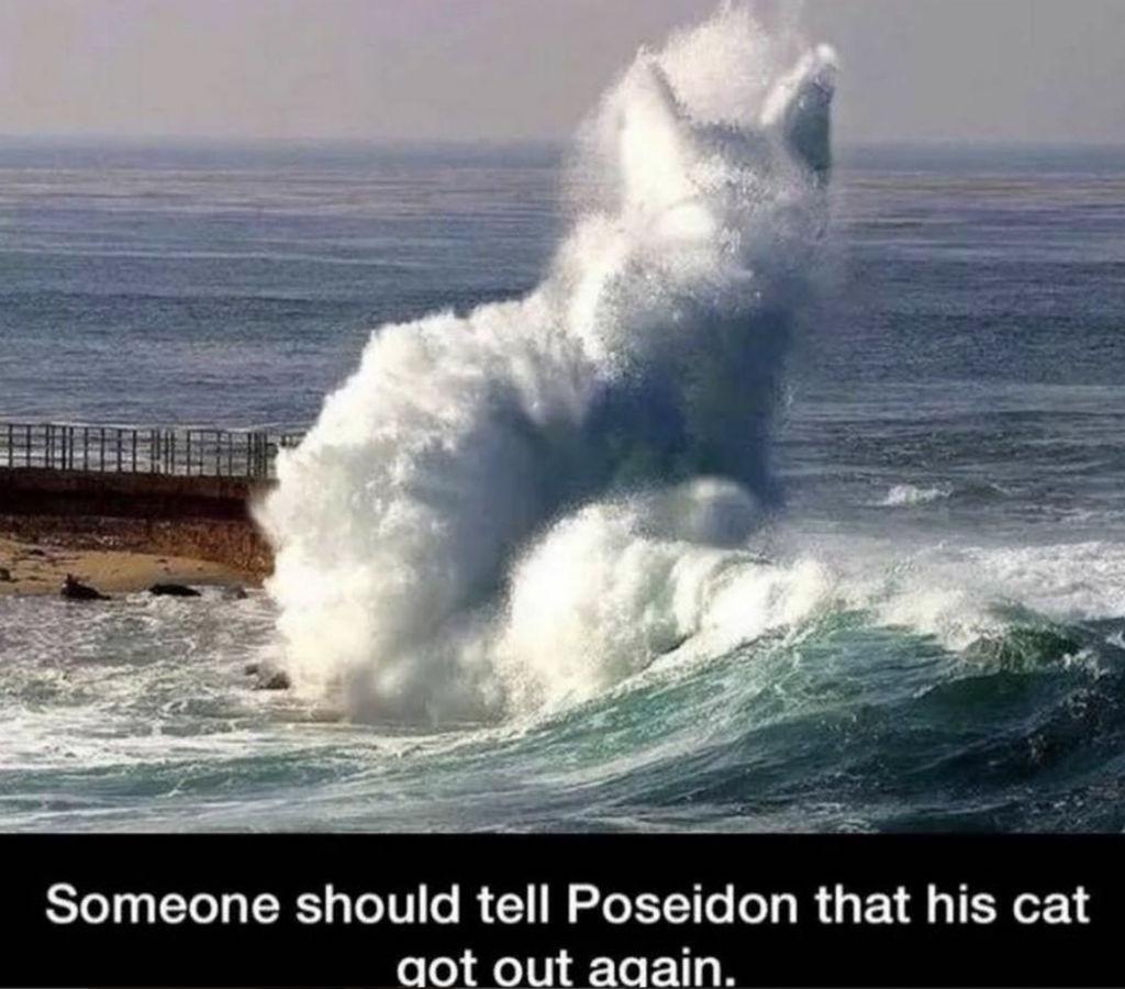 Poseidon cat memes