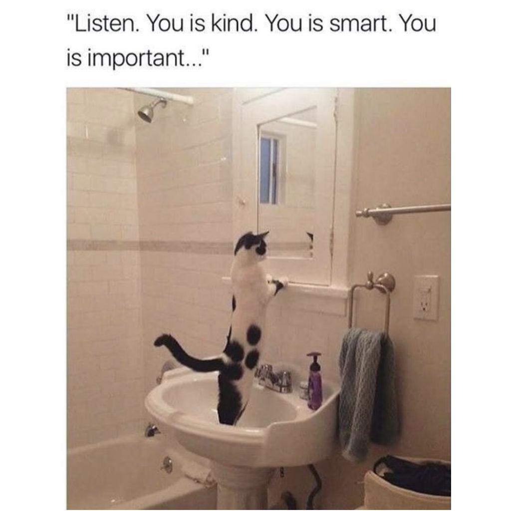 Affirmation cat memes