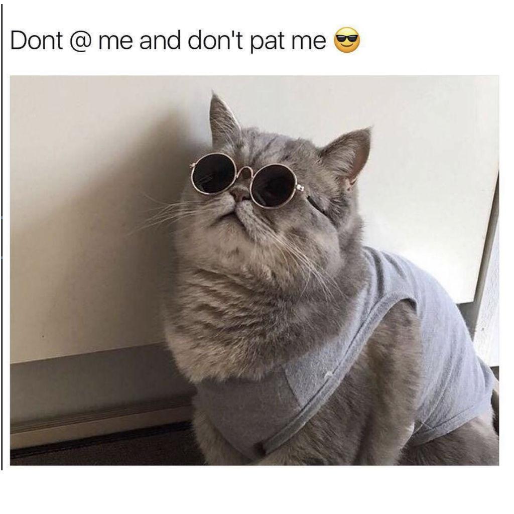 No petting cat memes