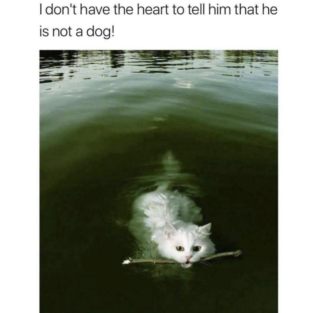 Dog cat memes