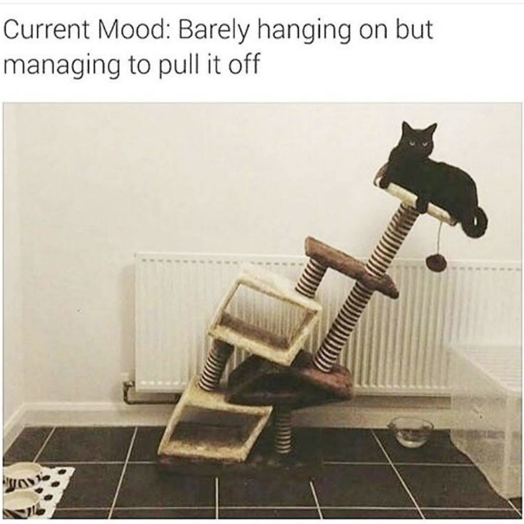 Hang in there cat memes