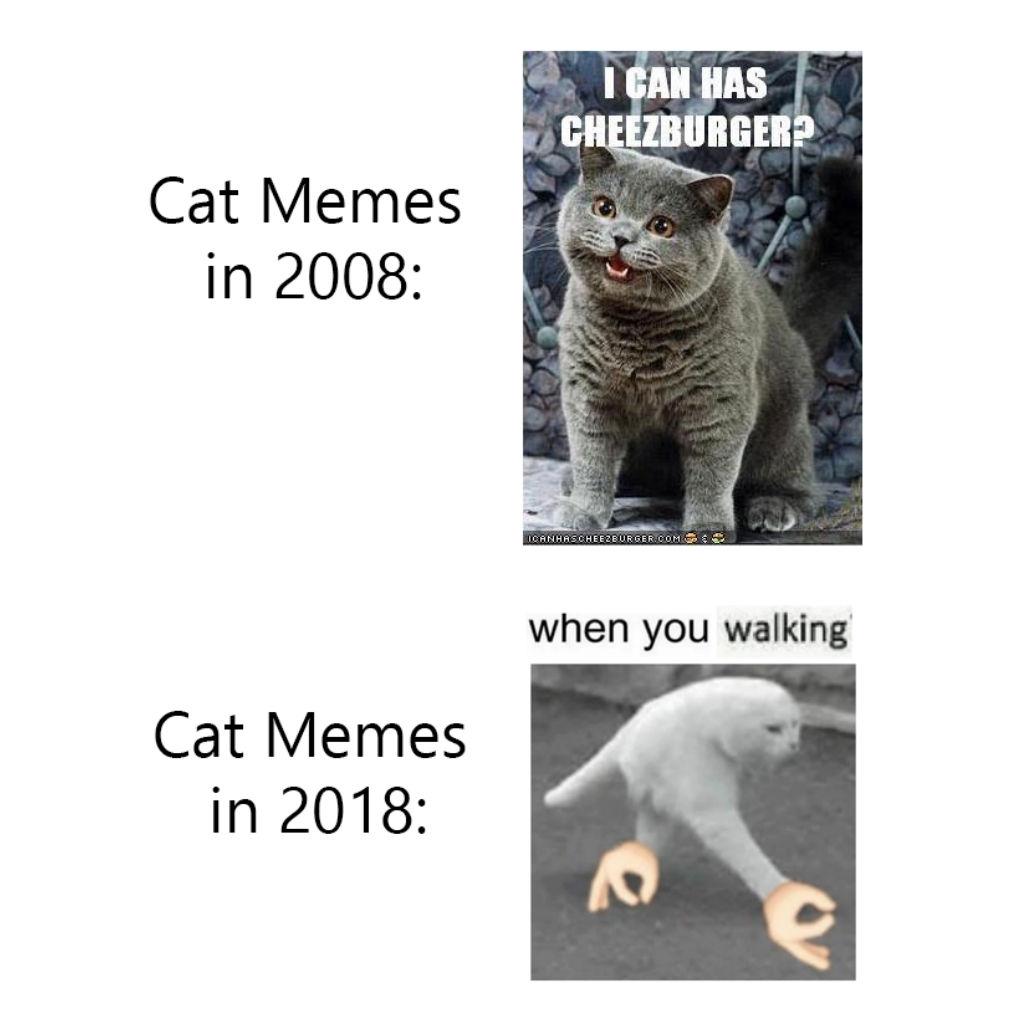 Evolution cat memes