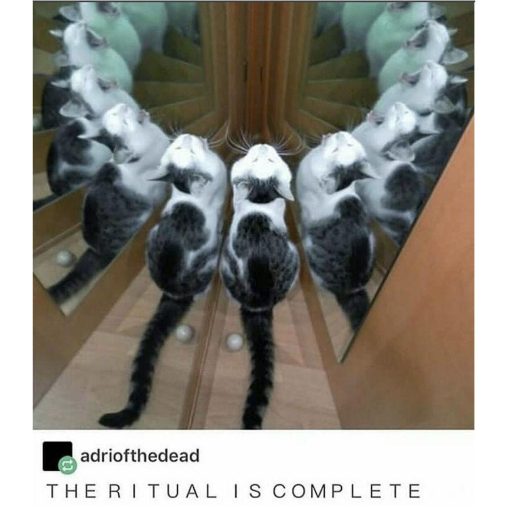 Ritual cat memes