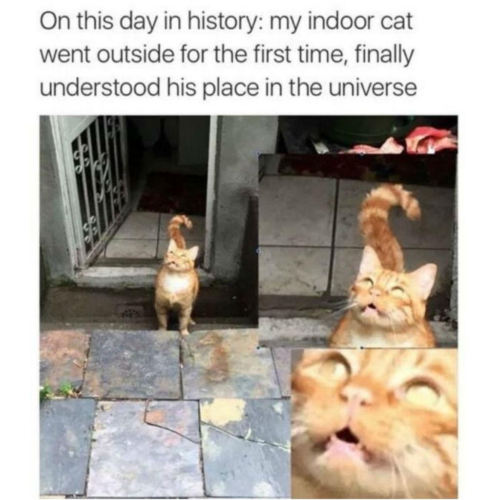 Outdoor cat memes