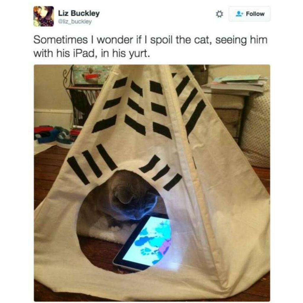 Yurt cat memes