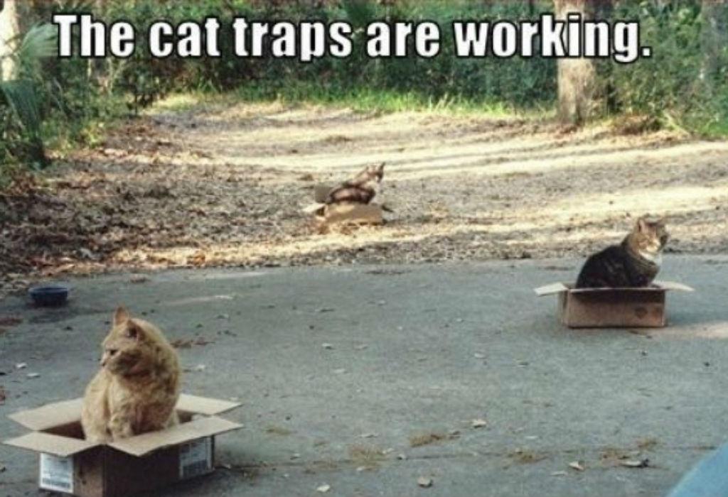 Cat traps cat memes